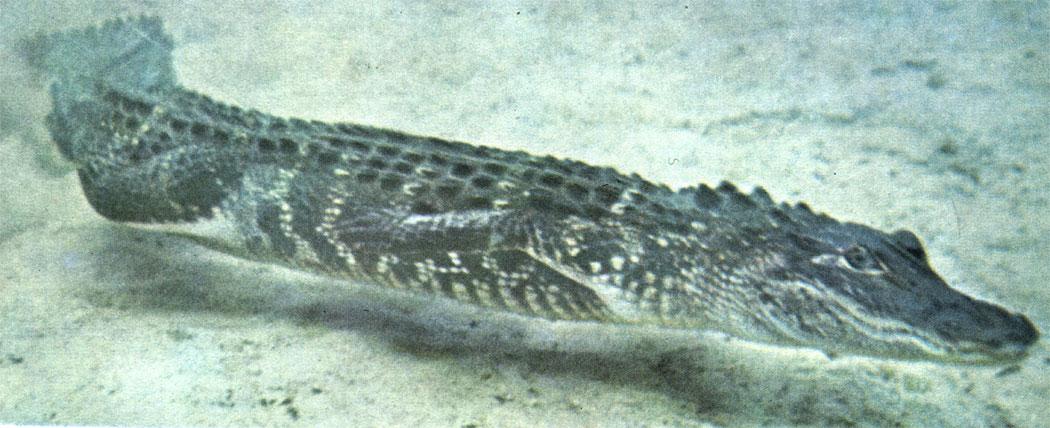 Рептилии лапы