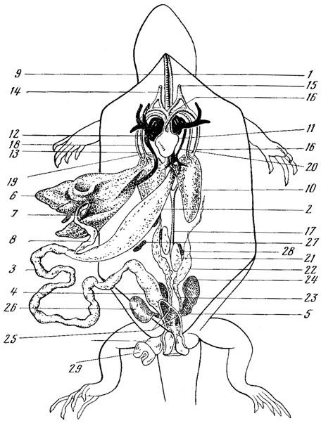 Схема расположения внутренних