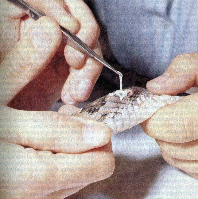 очистись от паразитов и живи без паразитов